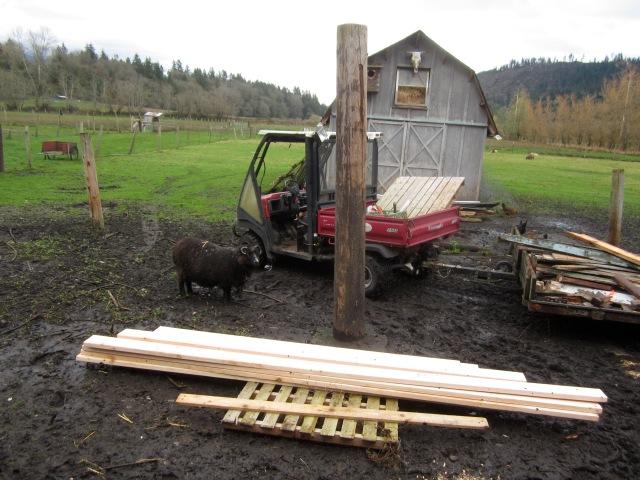 diddley-sheep-inspector
