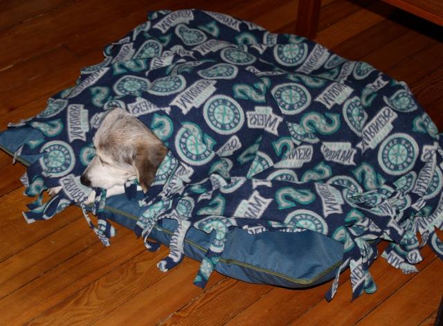 cold-christmas-beagle
