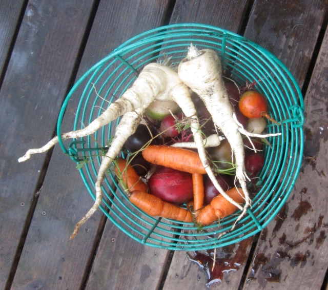 rinsed-beets-carrots-and-parsnips