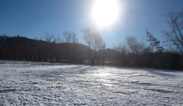 icy-pasture