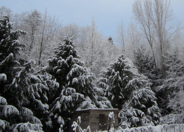 snowy-garden-shed