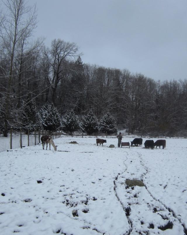 snowy-pasture
