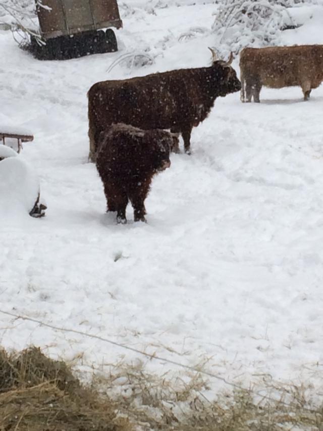 thormund-in-snow