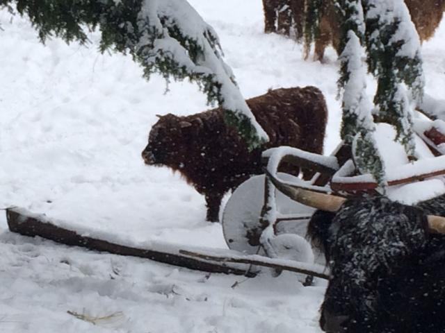 thormund-in-snow2
