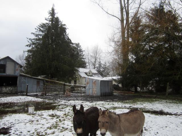 fallen-tree-and-donkeys