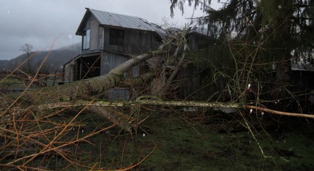 tree-on-barn