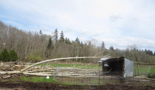 tree on donkey shelter