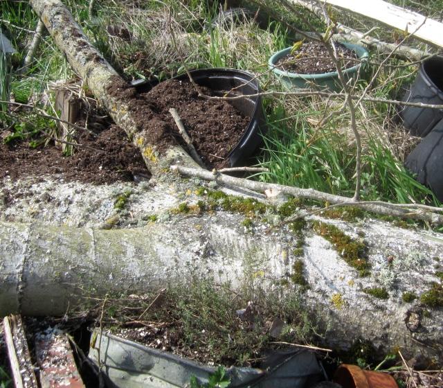 tree on thyme