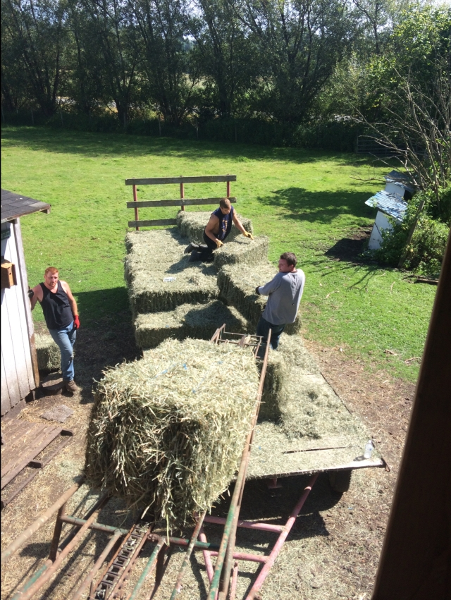 julian-and-nick-moving-bales.jpg