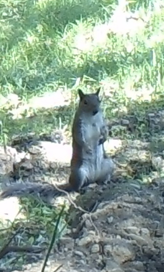 070117 standing squirrel