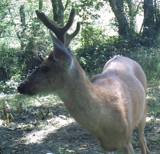072517 buck profile