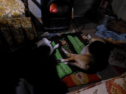 beagles and woodstove 112715