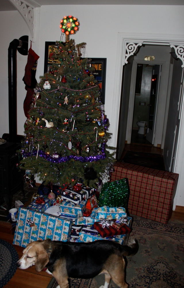 Christmas tree and wrapped presents and Sunny 122613