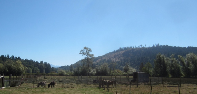 donkey pasture