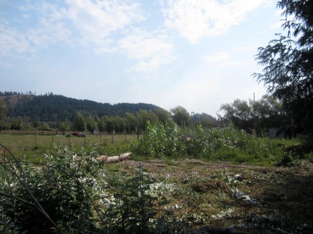 overgrown donkey pen back 828