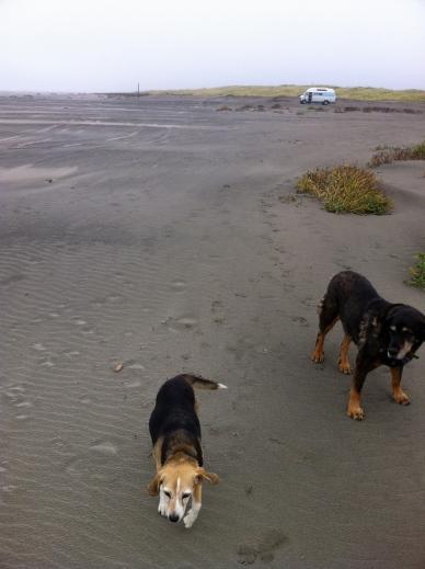 sunny mo and bluesie at long beach 091916