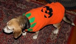 Sunny pumpkin 110115