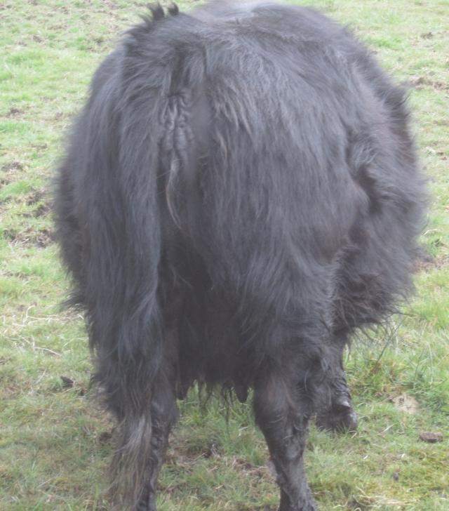 Indy's butt