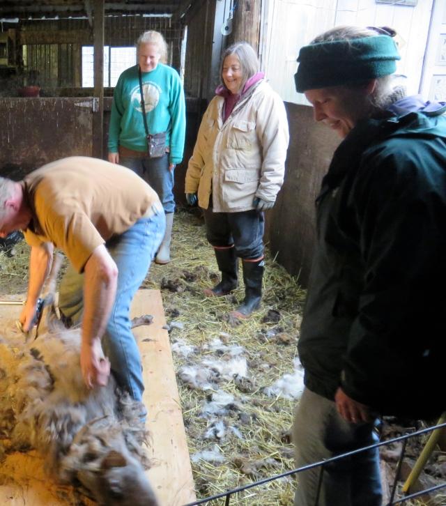 shearing crew2
