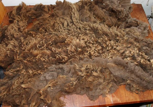 amanda fleece