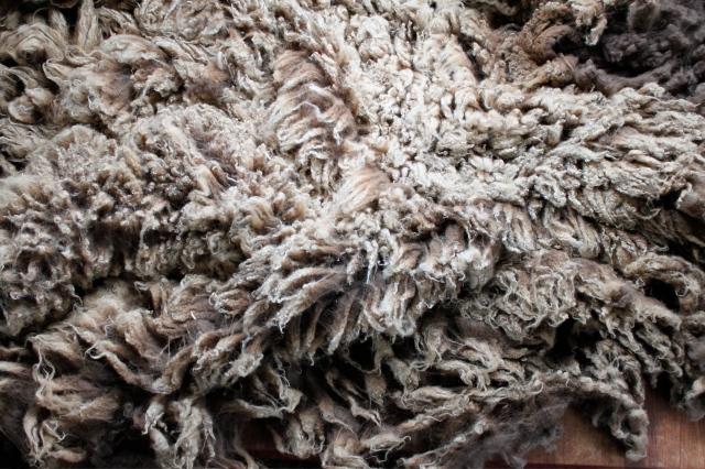 bambam fleece