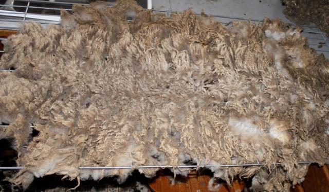 ewegenie fleece