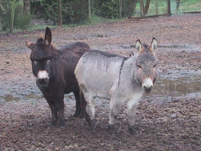 donkeys 2006