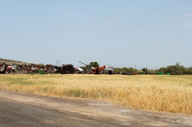 wheat field for threshing