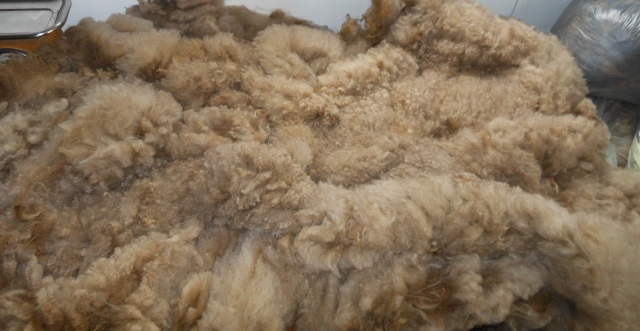Wendel's fleece cut surface