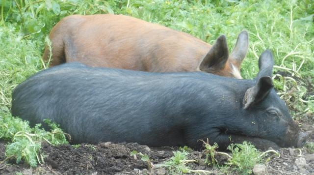 Rosalie and Truffle