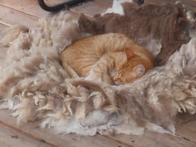 Izzy on fleece rug