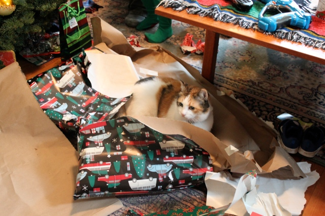 Chloe in wrapping paper