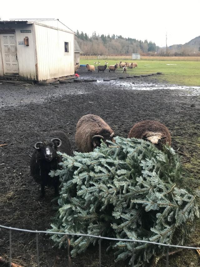 1 JAN sheep diddley christmas tree January 2019