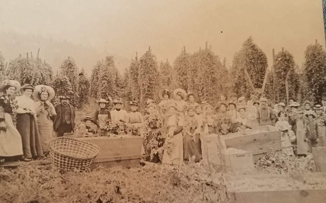 My great grandfather JJ Sullivan farmed 60 acres on Jarman prairie in Skagit co. 17 acres were in hops, the rest in hay. Top picture is their hops farm in 1898. .
