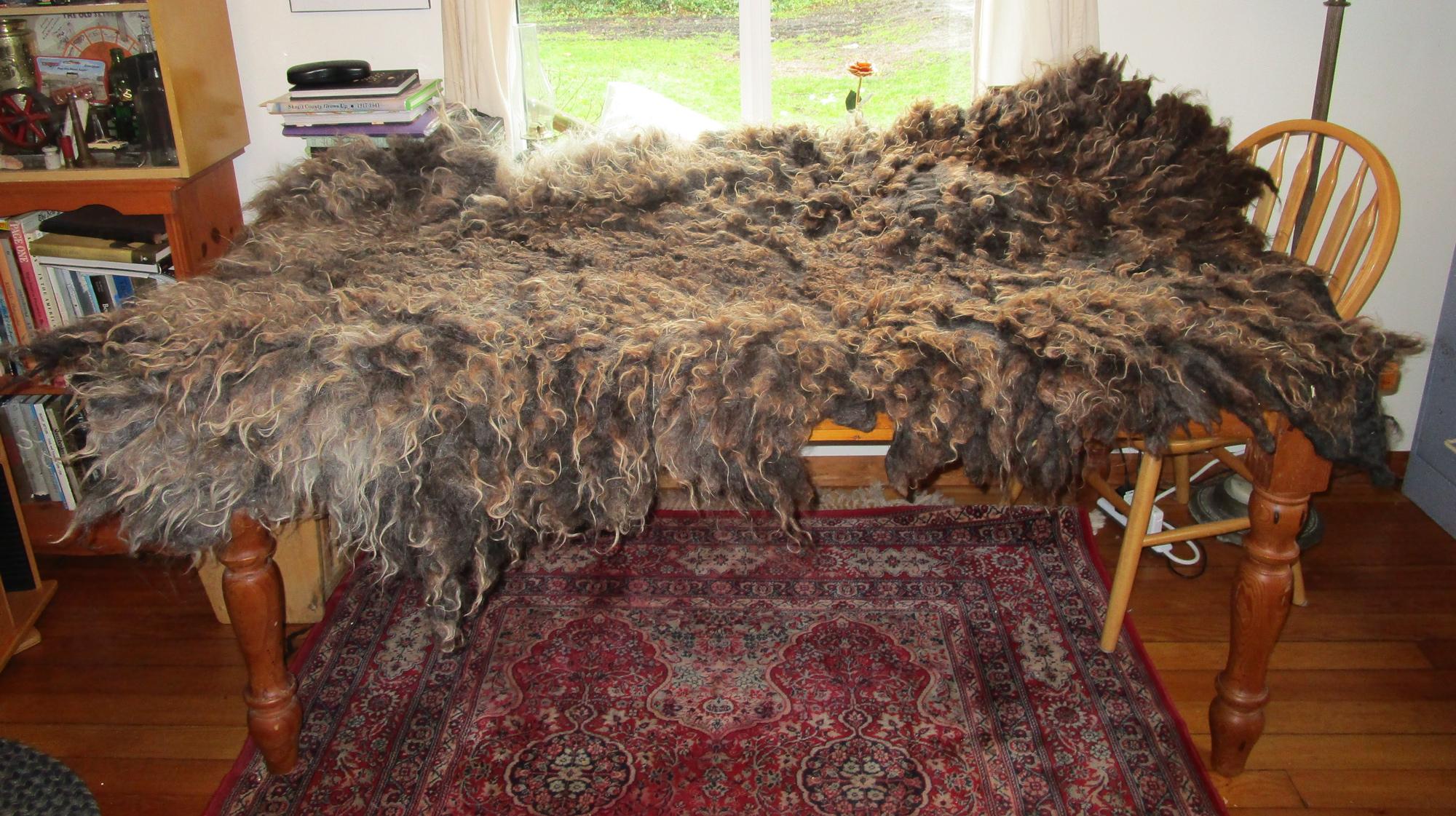 walda rug