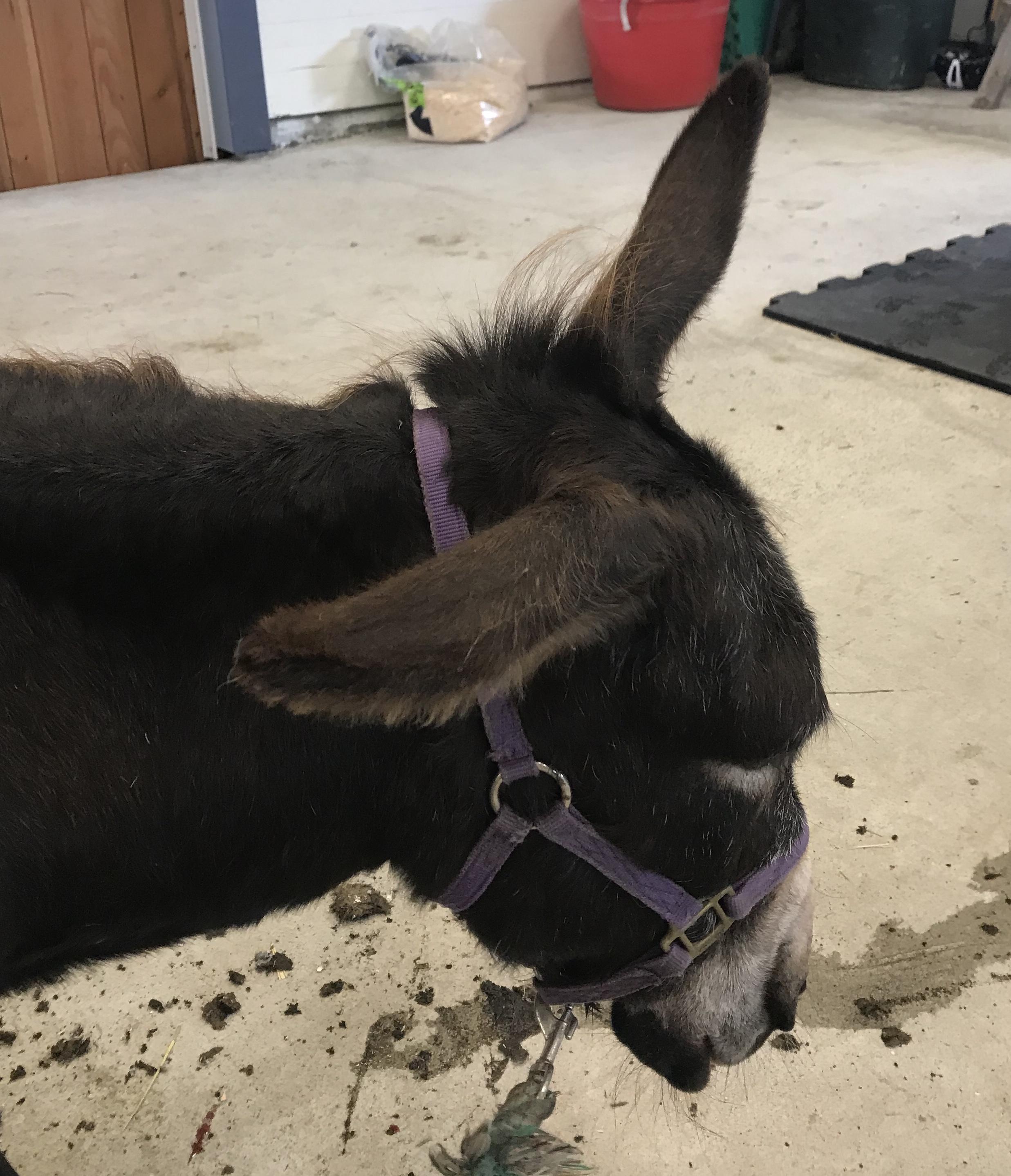 Olivia's ears