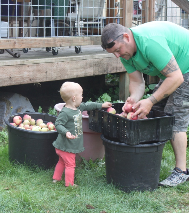 Piper helping Russ move apples