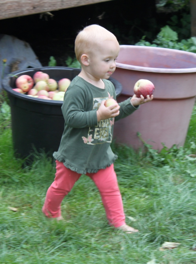 Piper moving apples