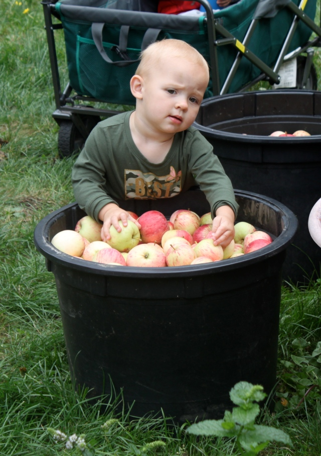 Piper with apples