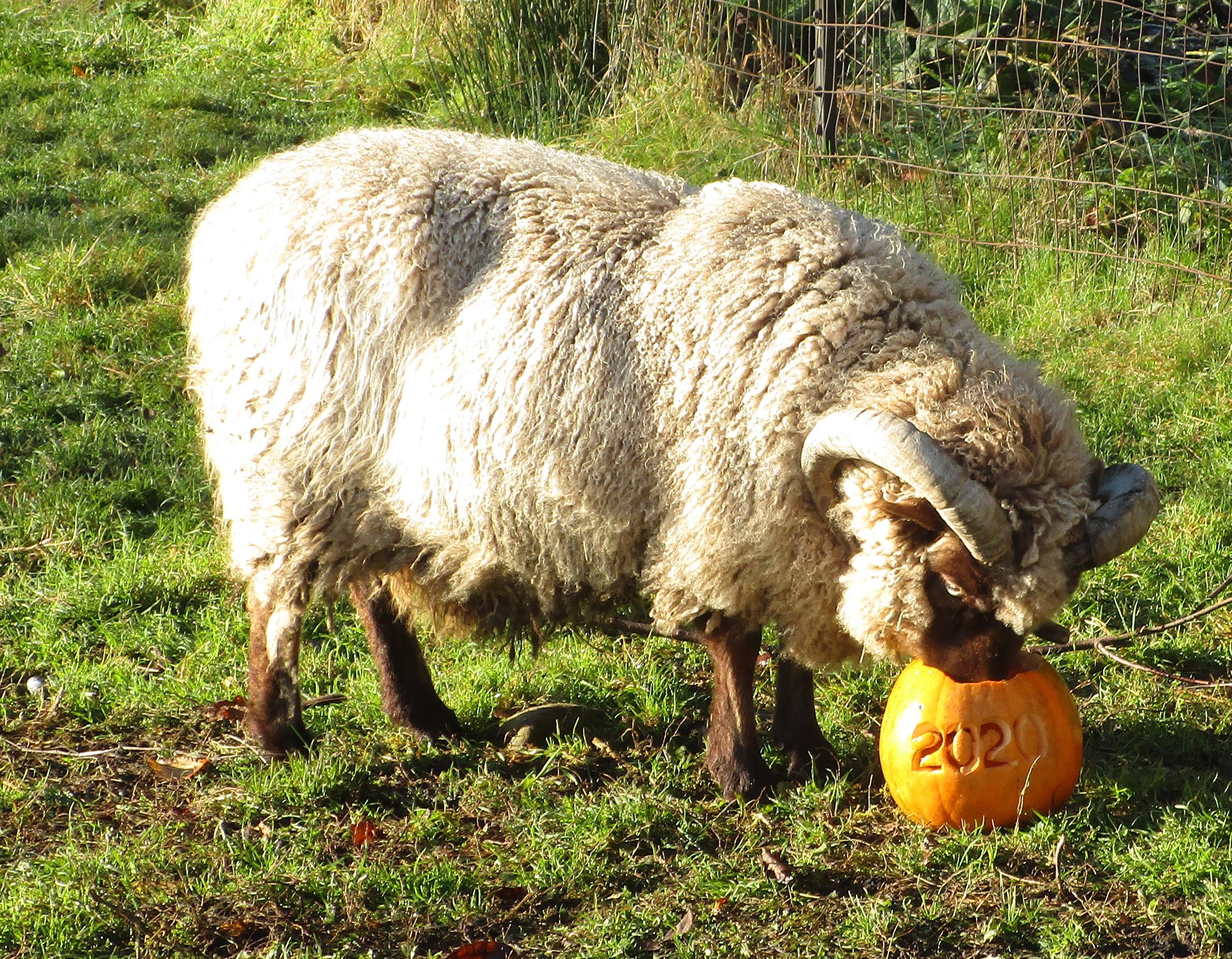 October1 animal