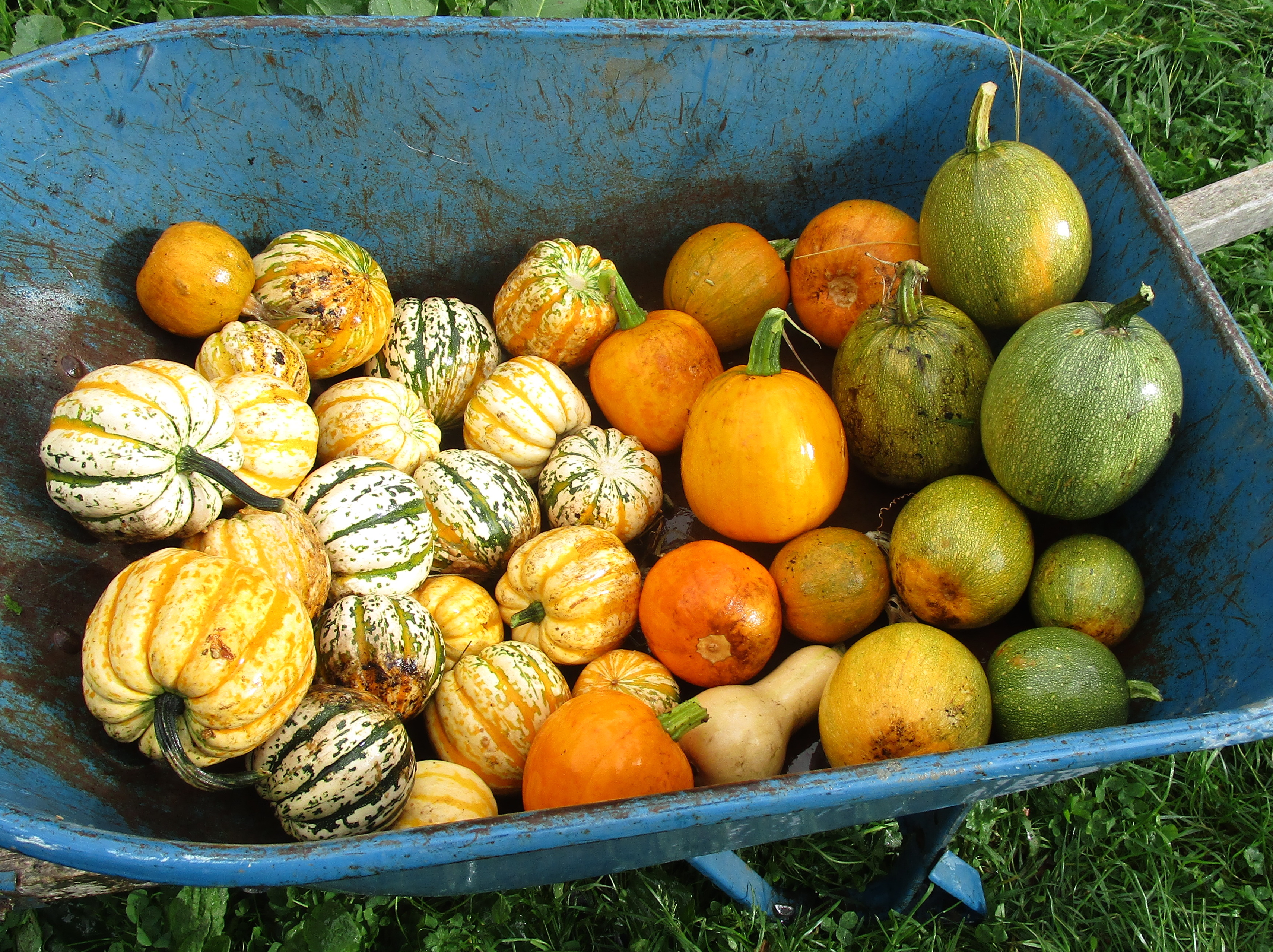 October1 farm all the saved winter squash