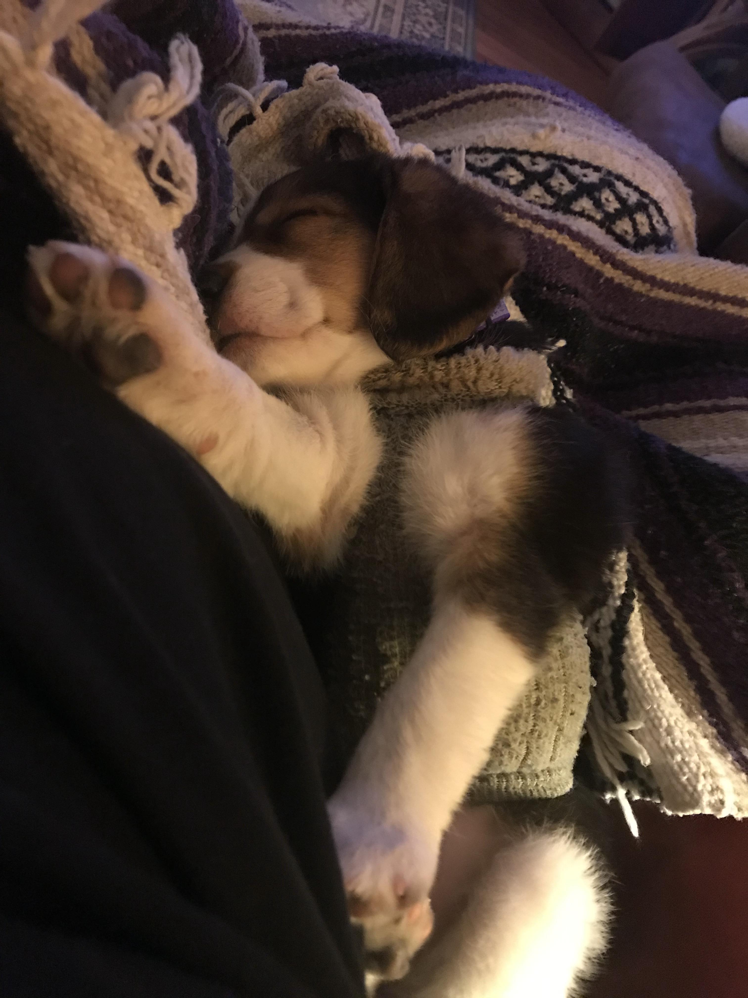 Ryeleigh sleeping with sock on