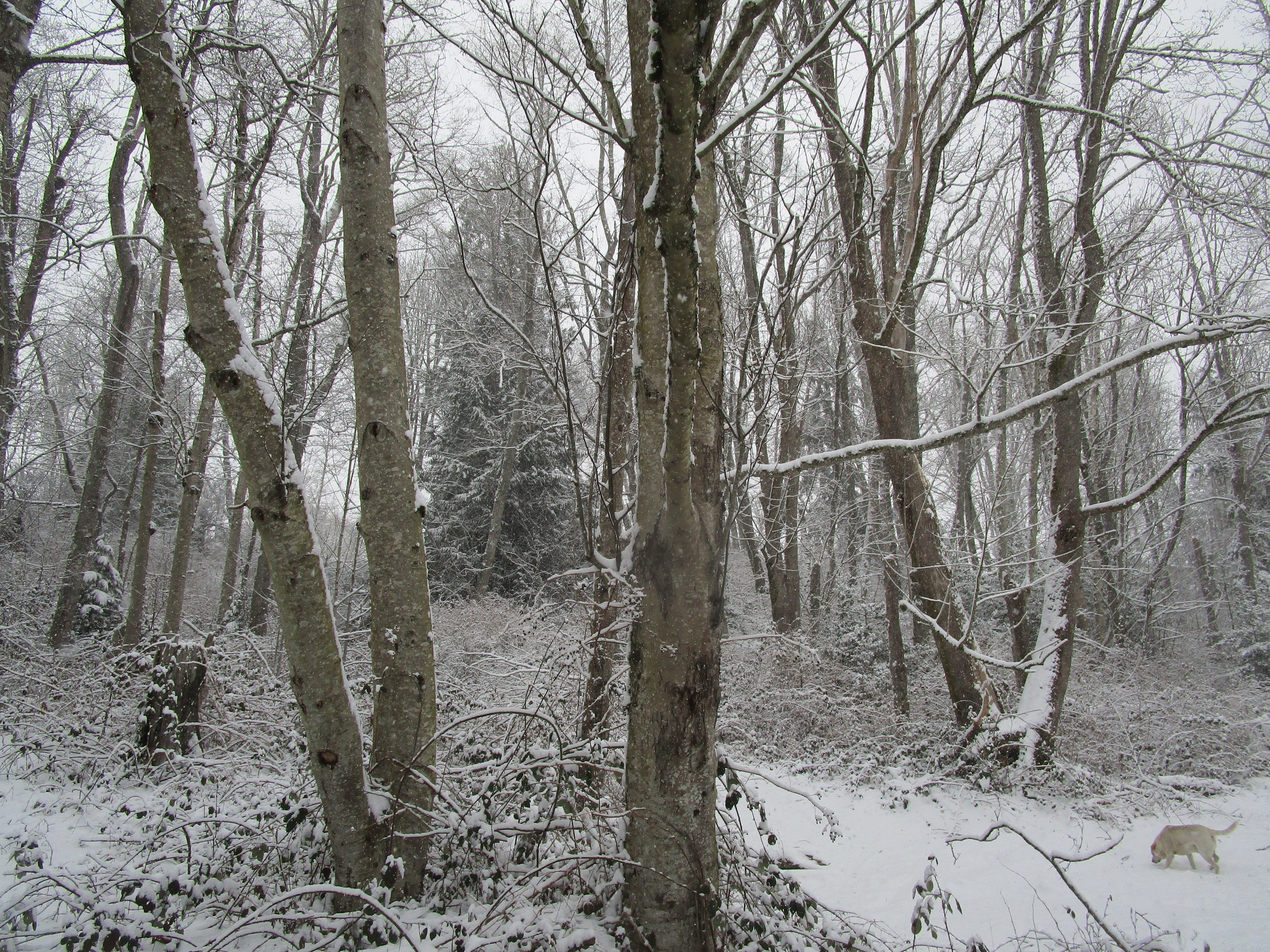 more snowy back forty trees with Steve