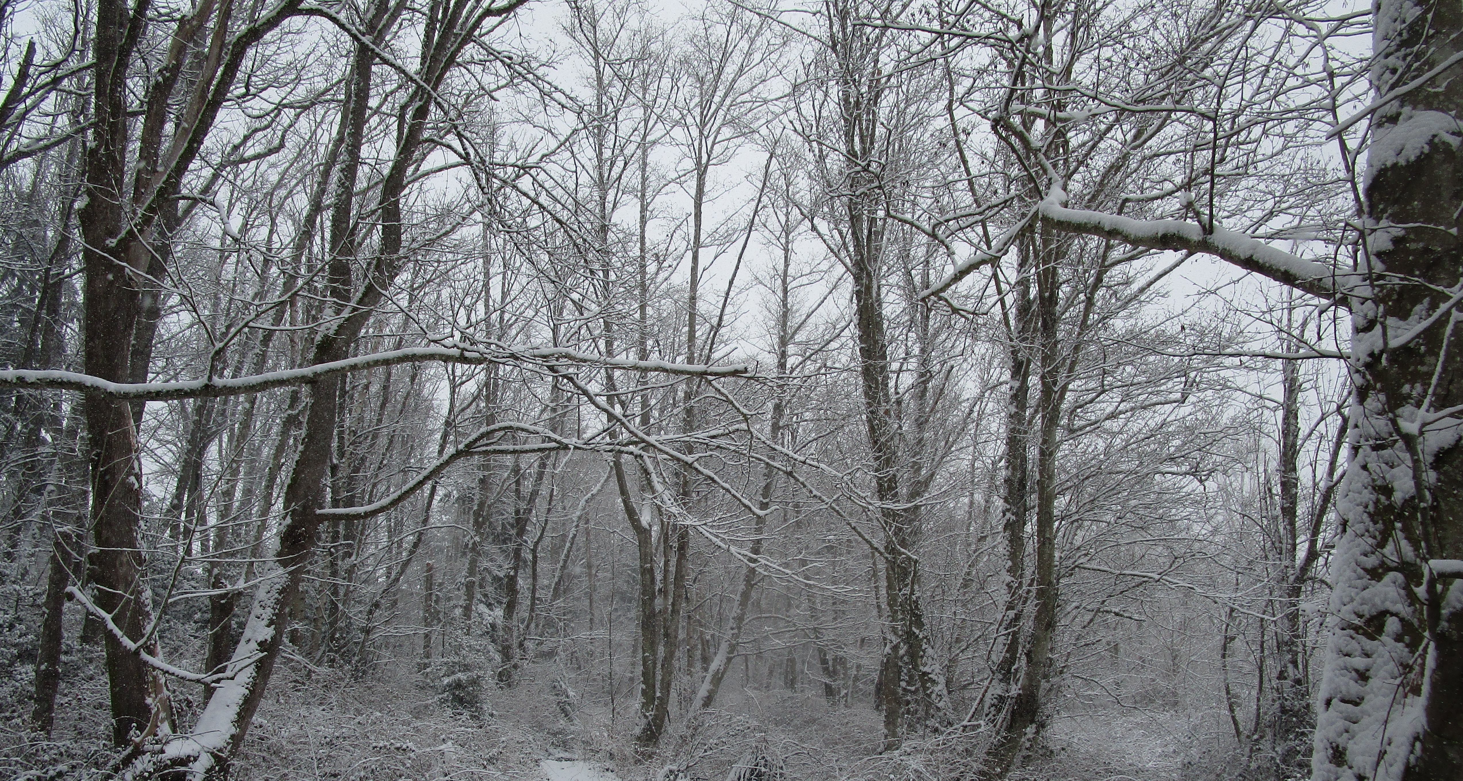 snowy back forty trees