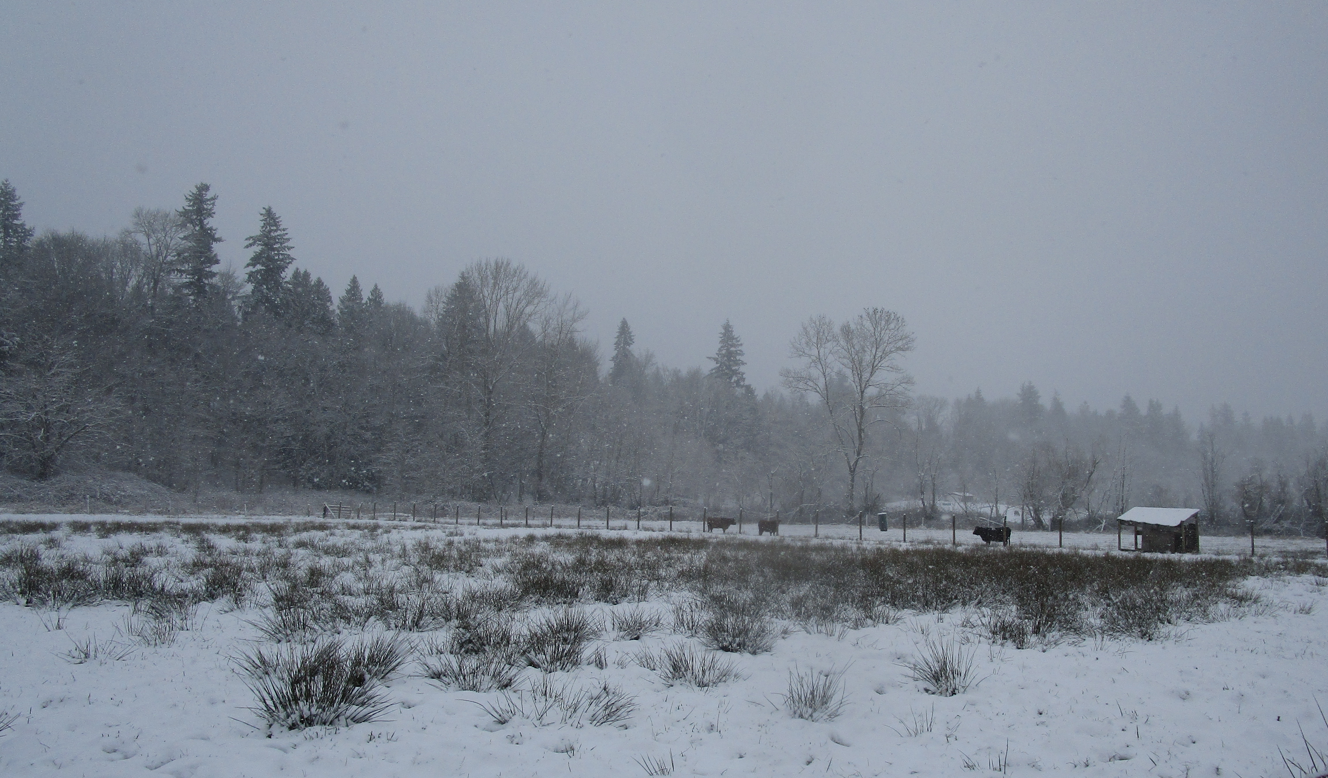 snowy back pastures