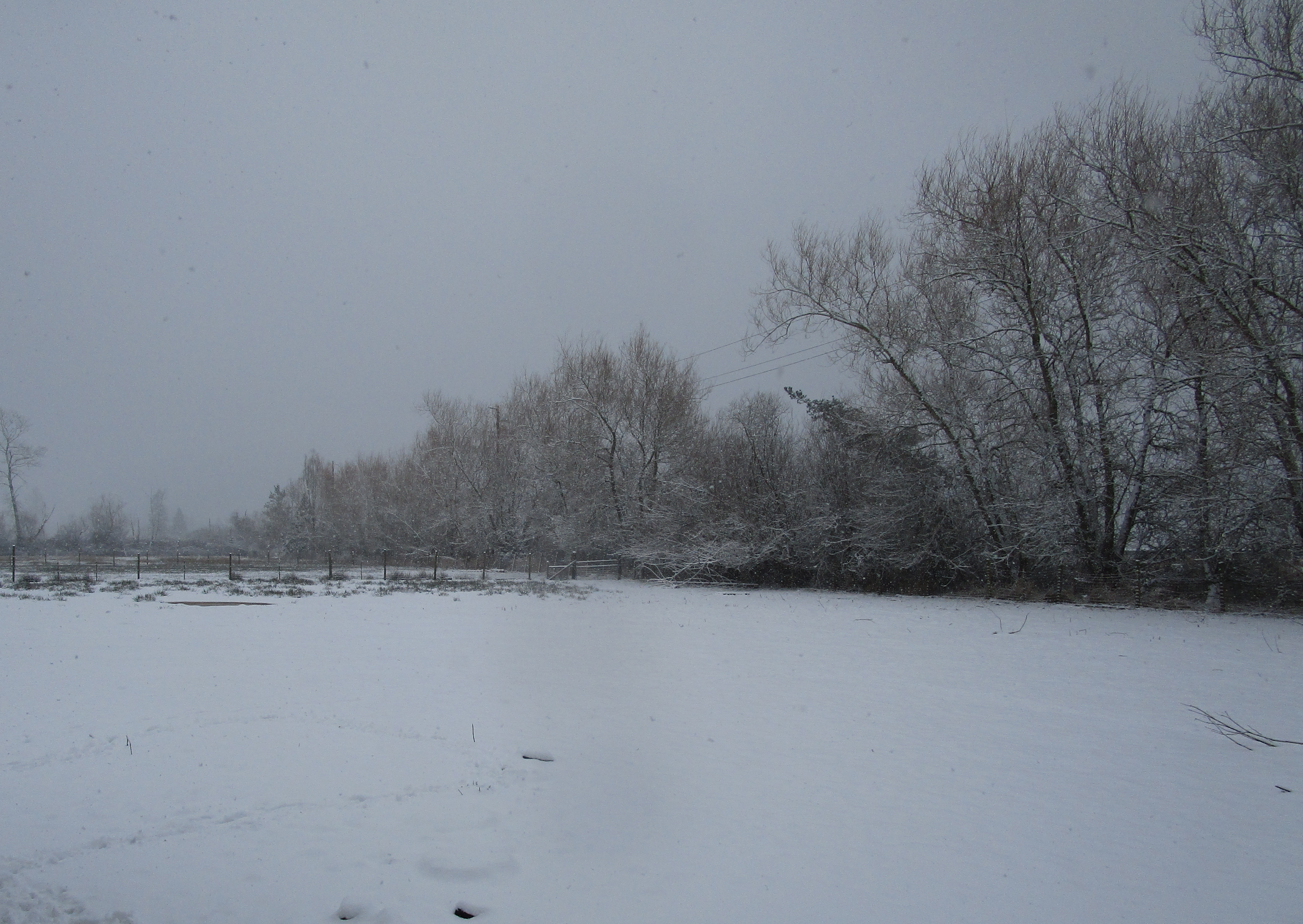 snowy front pasture