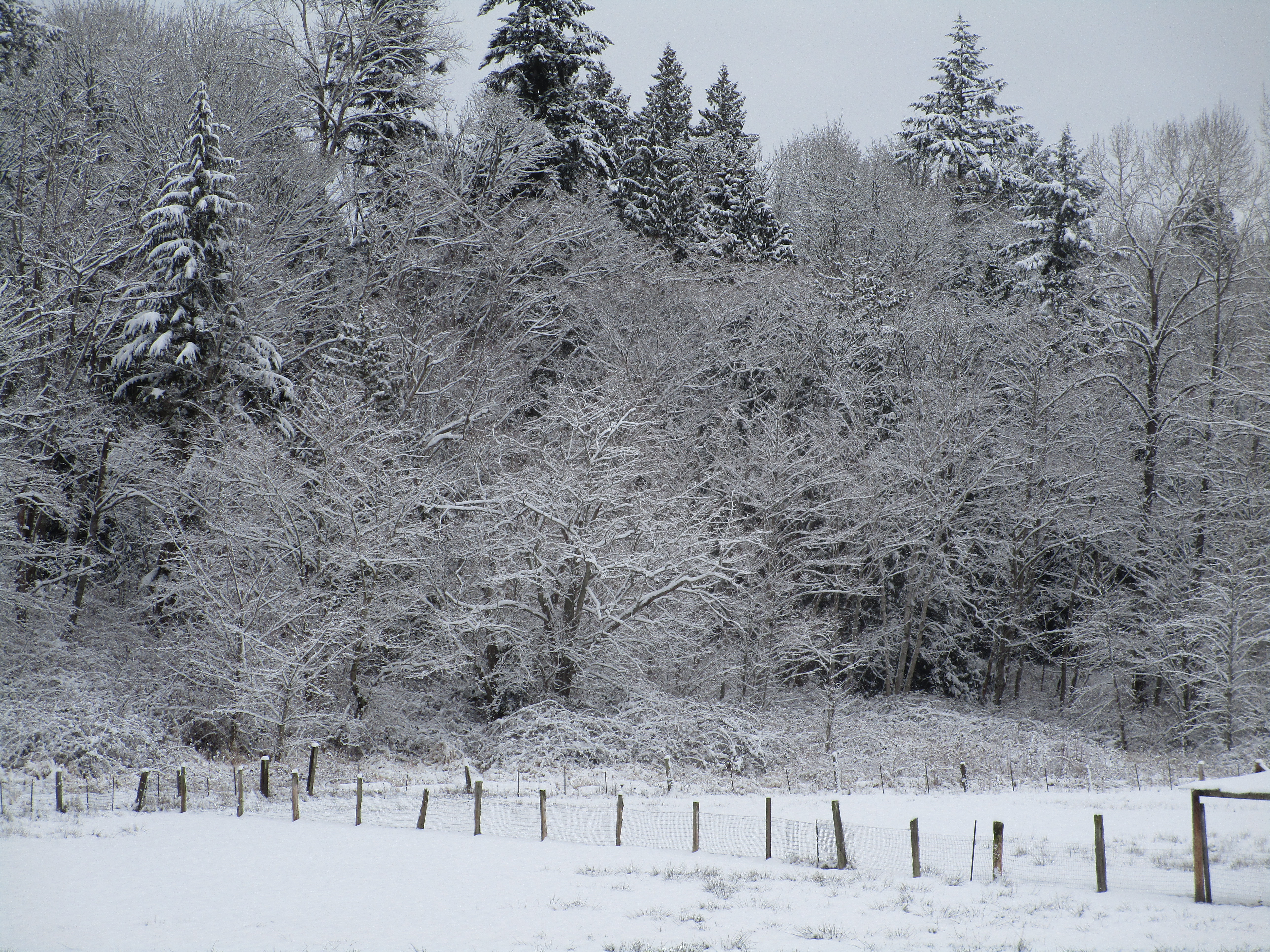 snowy trees behind middle back field