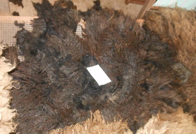 Diddley fleece