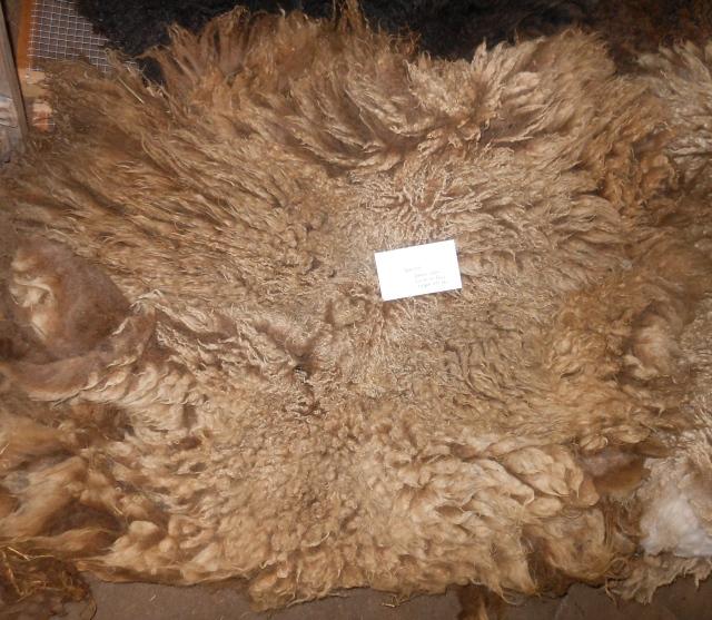 Vanessa fleece