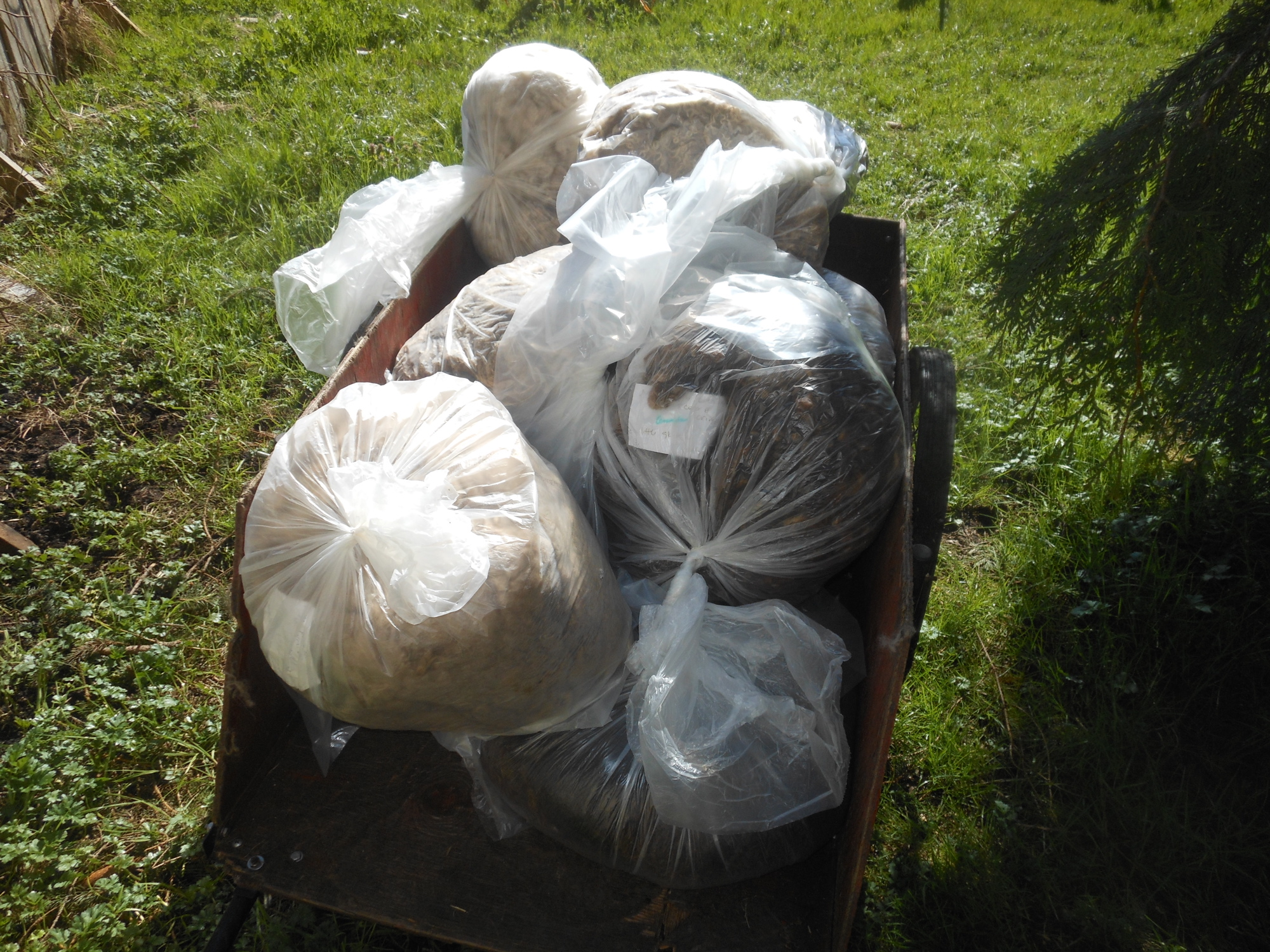 fleeces going to mill